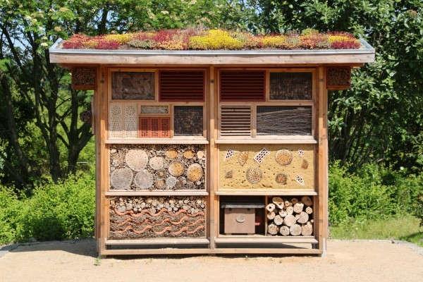 L'hotel à insecte : une structure adéquate en permaculture