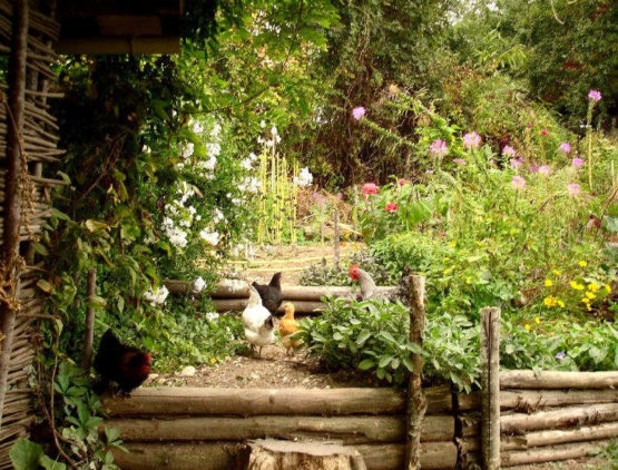 Un jardin en permaculture