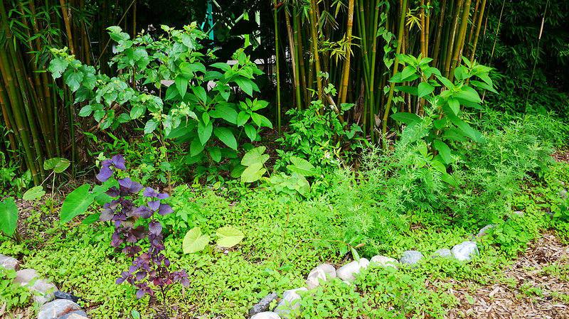Un petit espace de permaculture