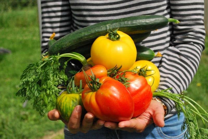 Une récolte de légume du potager