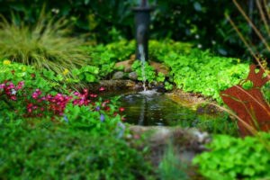 Fontaine et permaculture : le duo gagnant