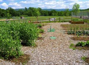 Parcelle recouverte de paillis pour permaculture
